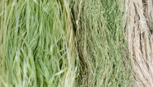 The Different Types of Hemp: Fiber, Grain and CBD-Rich